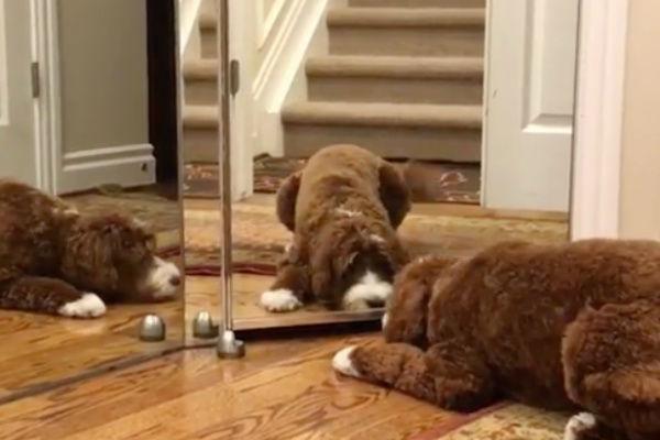 cane allo specchio