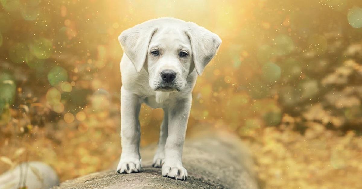 cane incuriosito tra entità sovrannaturali