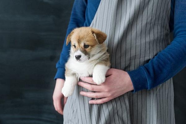 cucciolo dentro marsupio di stoffa