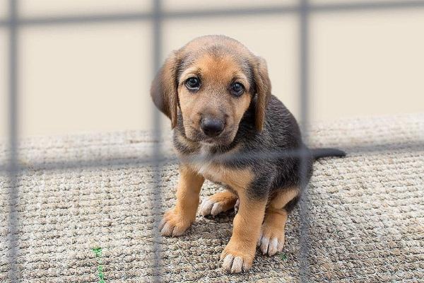 I cani possono vivere in canile? No e non se lo meritano