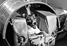 laika il primo cane nello spazio