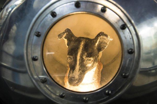 I cani possono vivere nello spazio?