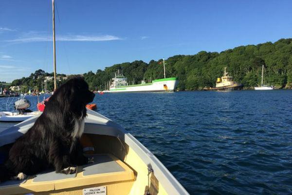 cane sulla barca