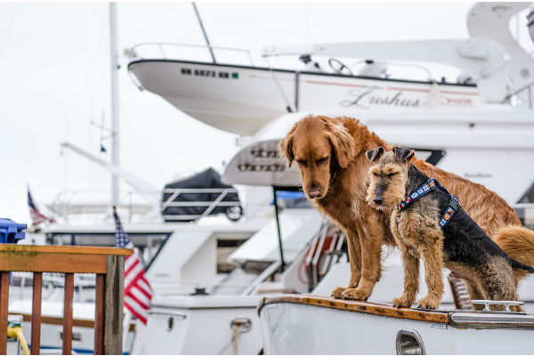 cani sulla barca