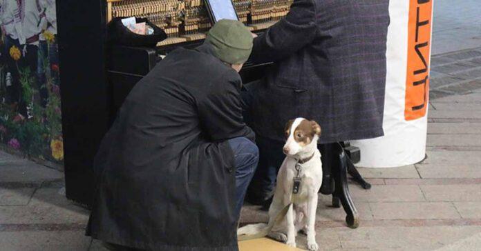 cane ascolta musica