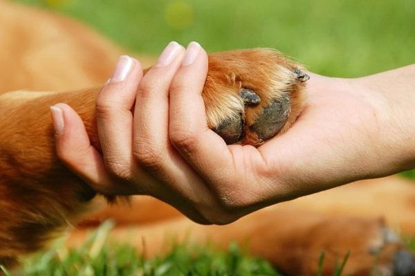 mano umana e zampa di cane