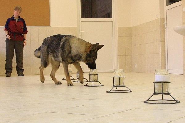 esperimento olfattivo con il cane