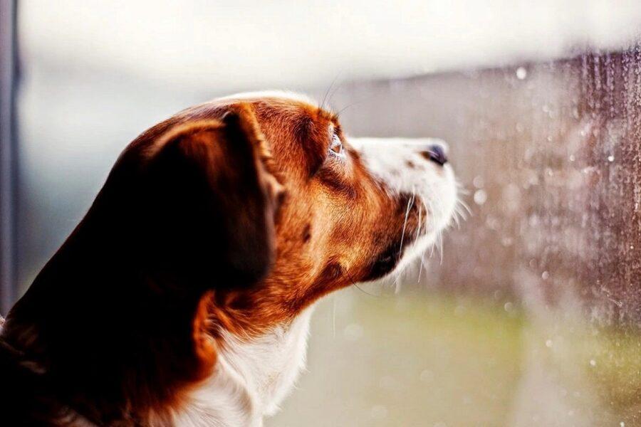 Cane che osserva il cielo