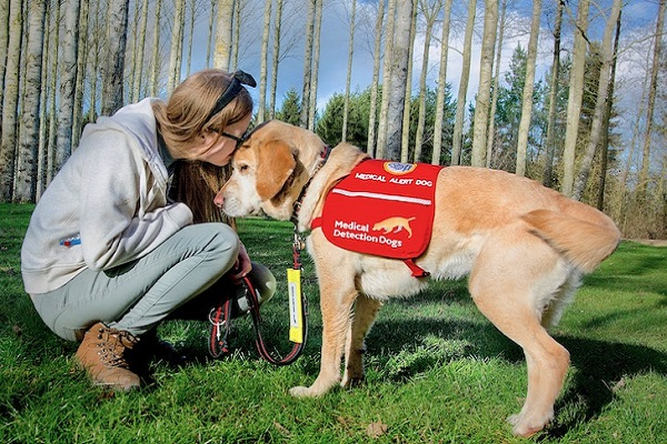 cane per pet therapy