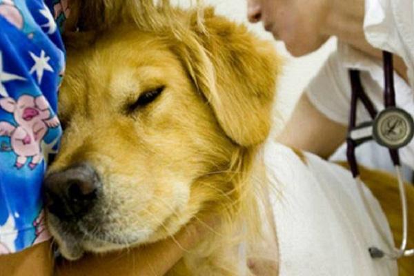 cane vicino alla padrona in ospedale