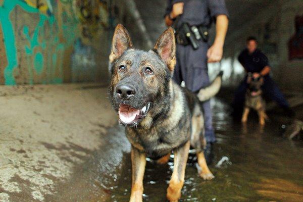cane sulla scena del crimine