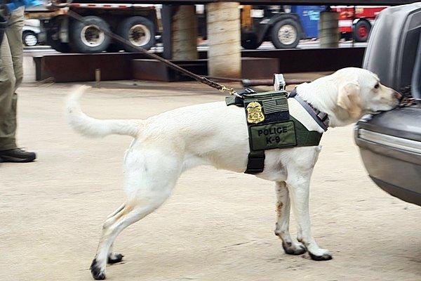 cane ricerca le prove