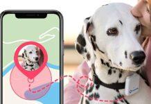 geolocalizzatore per cellulari per sapere dov'è il cane
