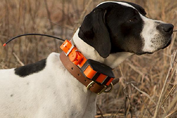 collare geolocalizzatore per cani