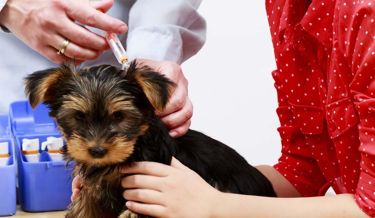 Canigen L per cani: cosa sapere sul vaccino contro la leptospirosi