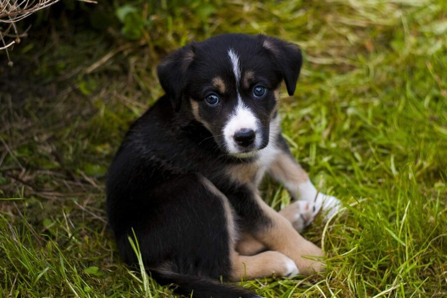 cucciolo disteso in giardino