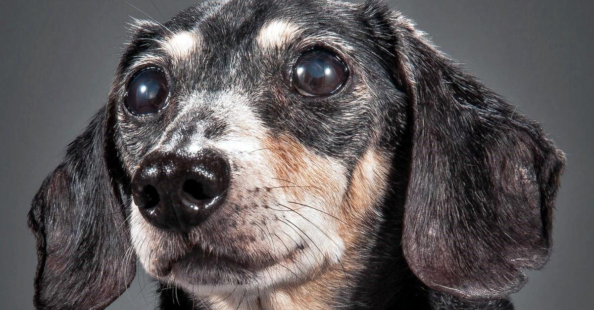 cane che fissa il vuoto
