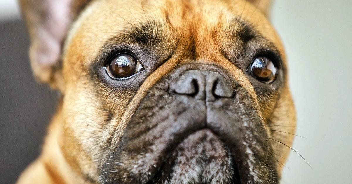 cagnolino con gli occhi tristi