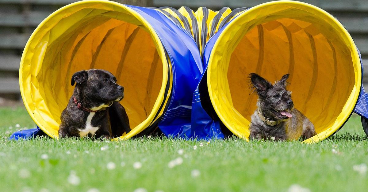 cani dopo addestramento
