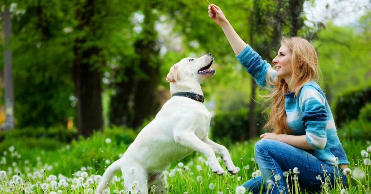 ragazza addestra cane