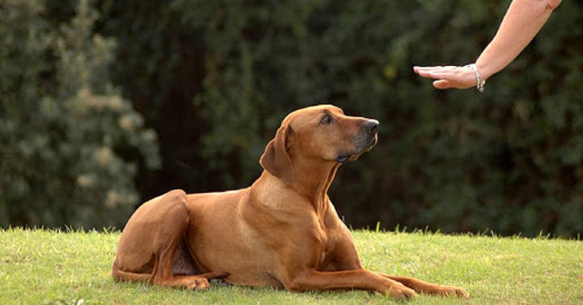 cane cerca di capire