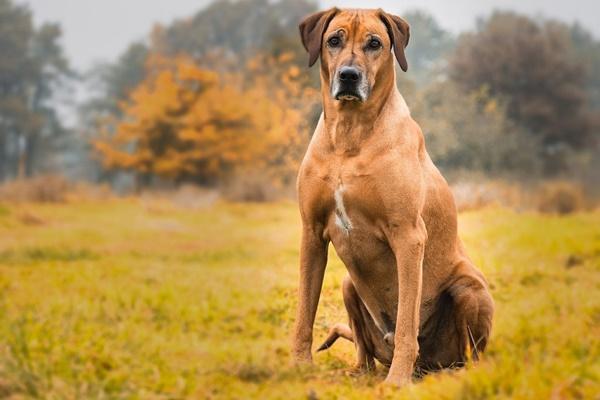 Com'è fatta la pelle del cane? E come funziona?