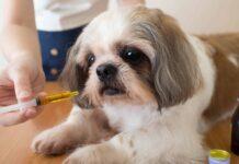 dare le medicina al cane
