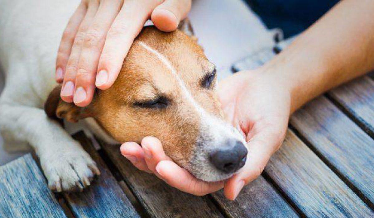 Come somministrare farmaci liquidi al cane