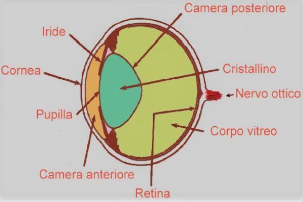 cornea occhio cane