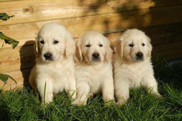 Cuccioli al sole