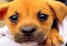 cucciolo-abbandonato-in-un-secchio-viene-salvato-da-alcuni-soccorritori