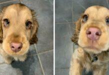 cucciolo-conquista-il-web-con-la-sola-forza-del-suo-sguardo