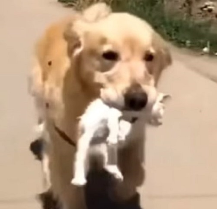 doggo-gesto