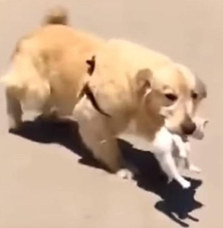 doggo-vita