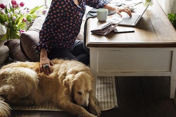 cane accucciato accanto a ragazza al pc