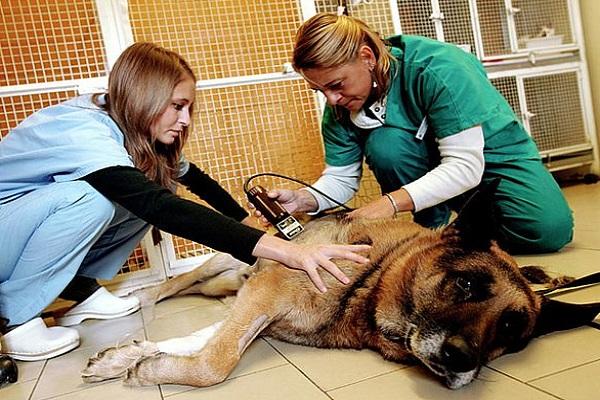 rasatura pelo del cane