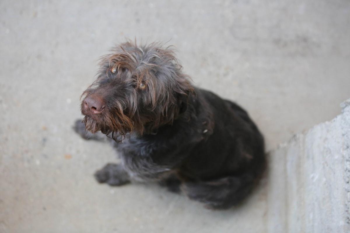 cane con il pelo più lungo sul muso