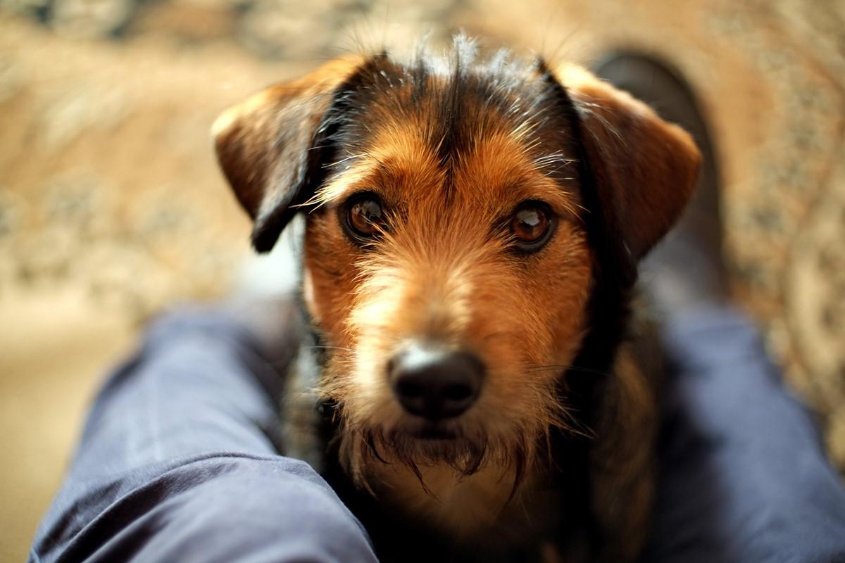 Embolia fibrocartilaginea del cane: cause, sintomi e cure