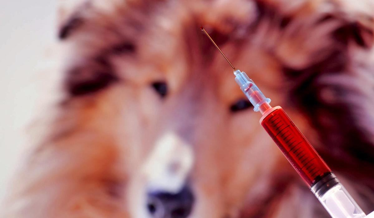 esami del sangue completi per il cane