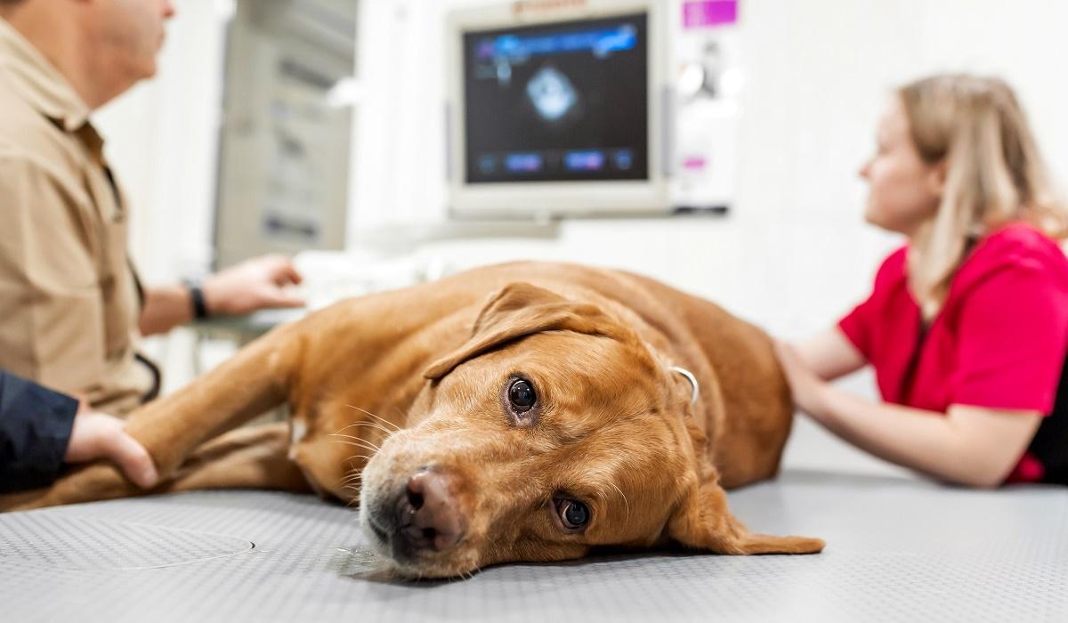 portare il cane dal veterinario