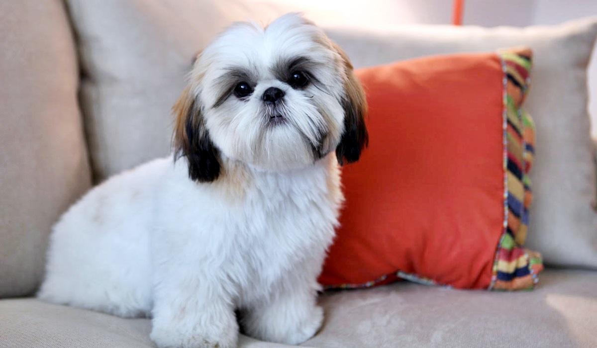 Feng Shui per il cane: sì, esiste anche per Fido