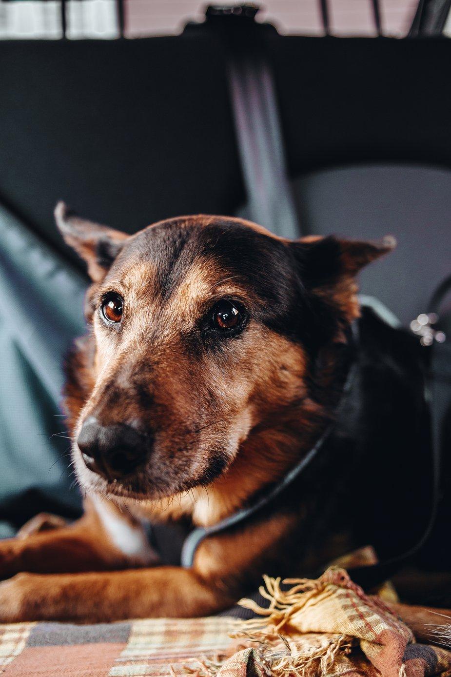 cane guarigione