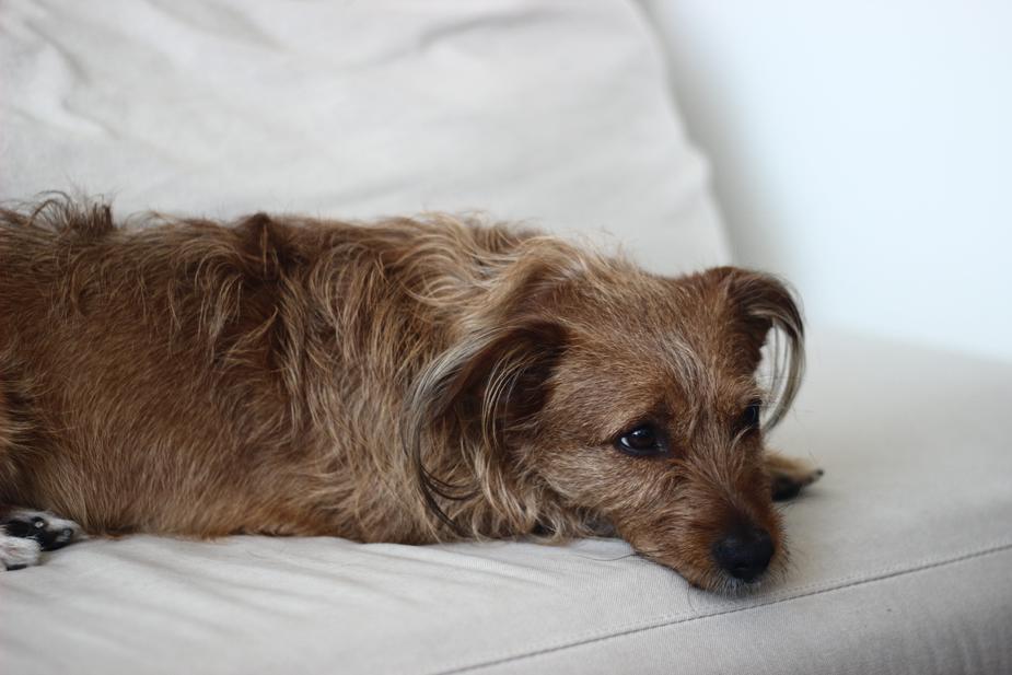cane con gastrite