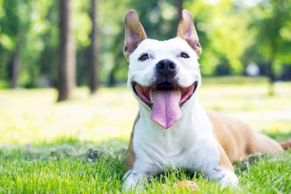 cane felice sul prato