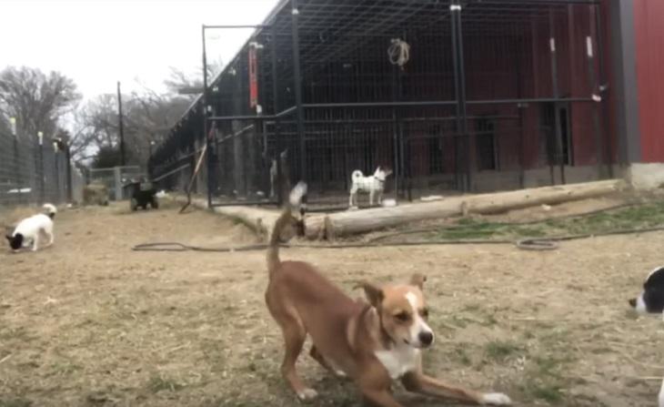 gia-amici-cani