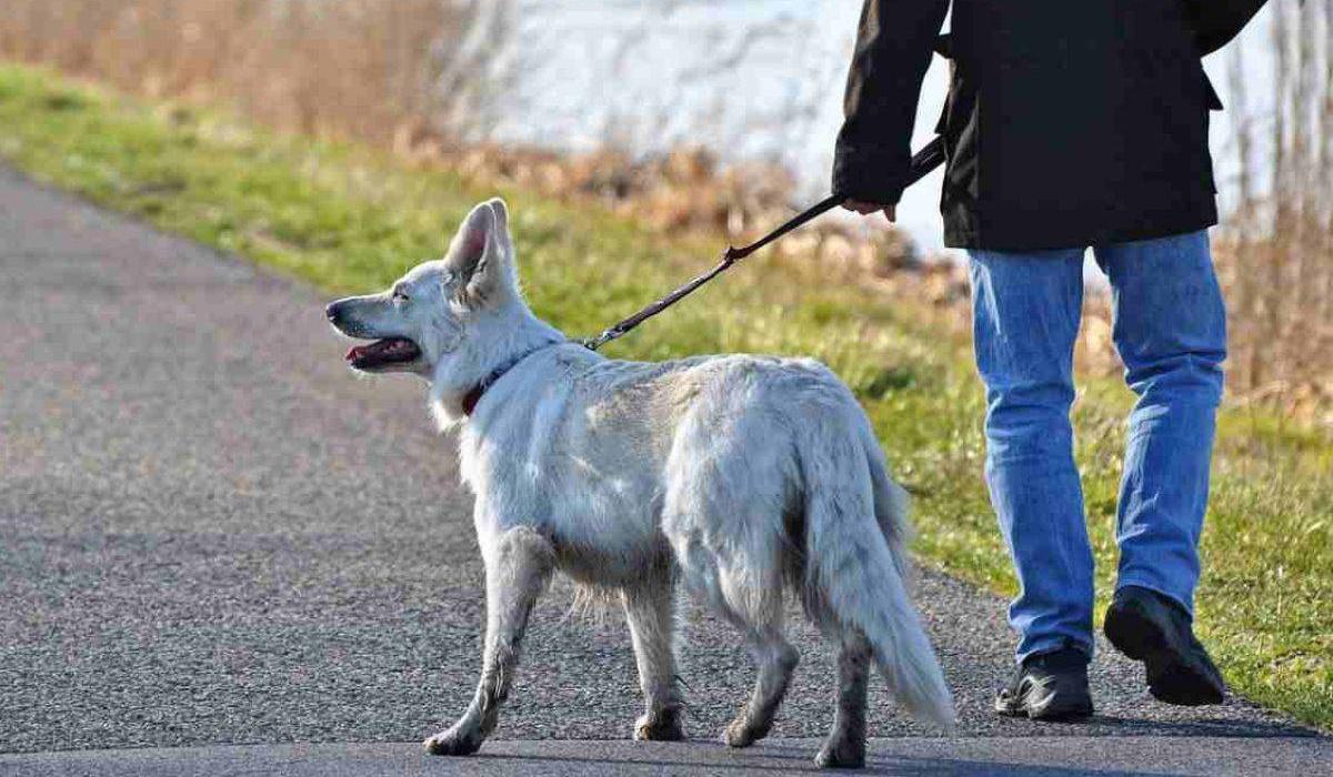 Glucosamina per cani: cos'è? A cosa serve?