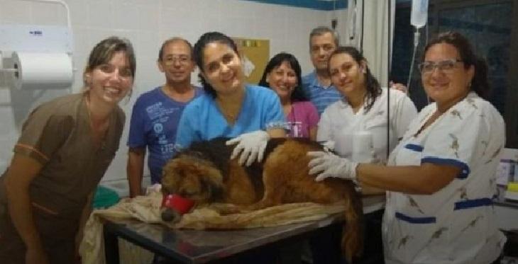 homero-veterinario