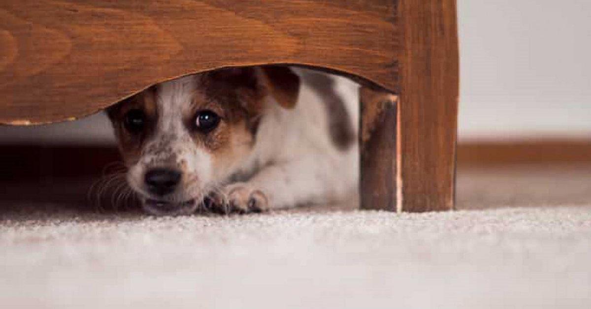 I cani capiscono se arriva un tornado?