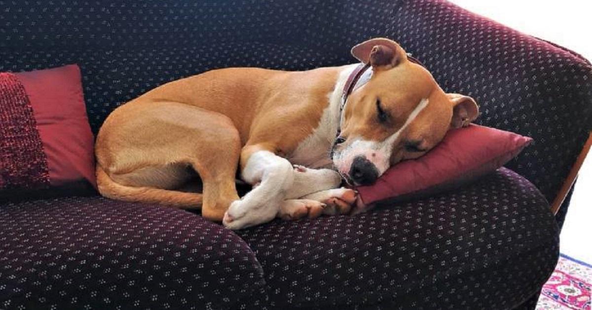 Il cane ha ingerito veleno per topi: cosa fare