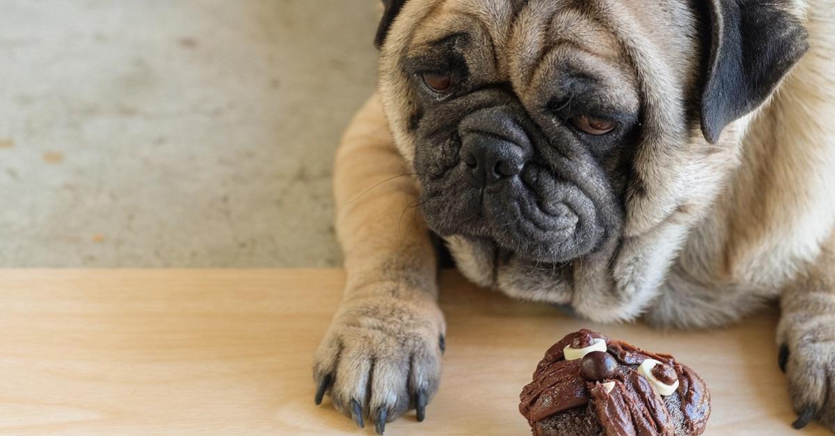 I cani possono mangiare i bigné?